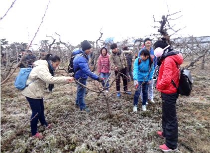 果树冬季修剪实习
