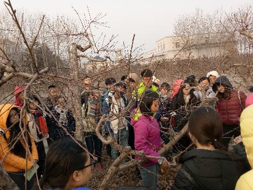 园艺场桃种质资源圃  赵彩平老师讲解桃树修剪方法